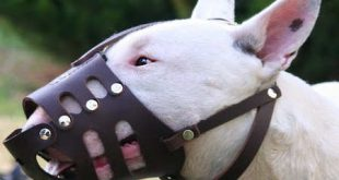 english-bull-terrier-leather-dog-muzzle-bt-muz_LRG
